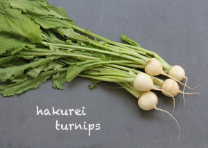SFC_turnips_hakurei_labeled